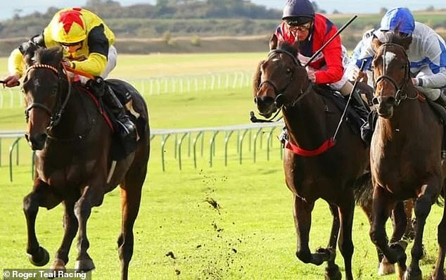 Roger Teal has high hopes Kenzai Warrior can go one better than Tip Two Win in 2,000 Guineas