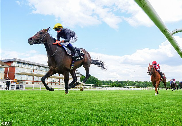 English King's odds tumble for Derby after the colt claims emphatic trial victory at Lingfield
