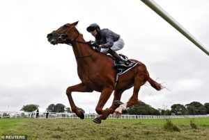 Robin Goodfellow's racing tips: Best bets for Wednesday, July 8