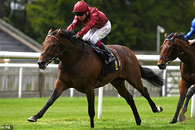 Darain has chance to show his worth as £3.675m colt takes significant step up in the Voltigeur