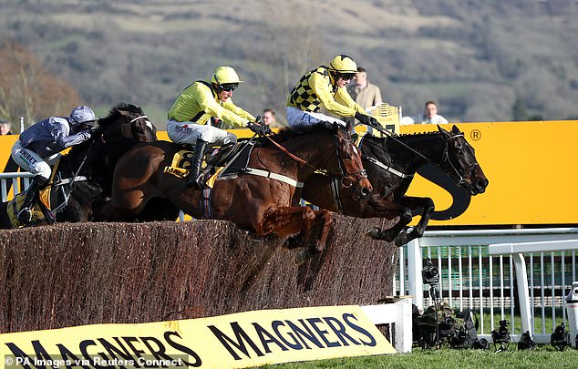 Cheltenham suffers fresh setback after Magners call time on their sponsorship of the Gold Cup